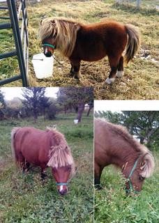 pony3.jpg