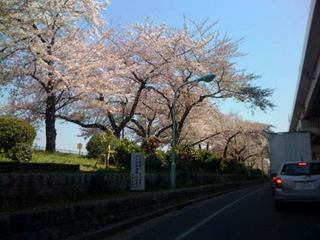 sumidagawa.jpg